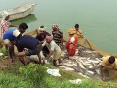 Telangana Fisheries Development Scheme