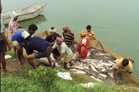 Telangana Fisheries Development Scheme