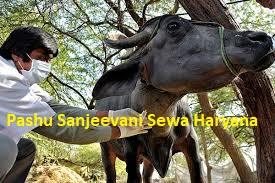 Haryana Pashu Sanjeevani Sewa
