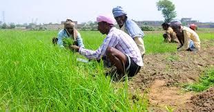ब्याज मुक्त किसान ऋण योजना झारखंड
