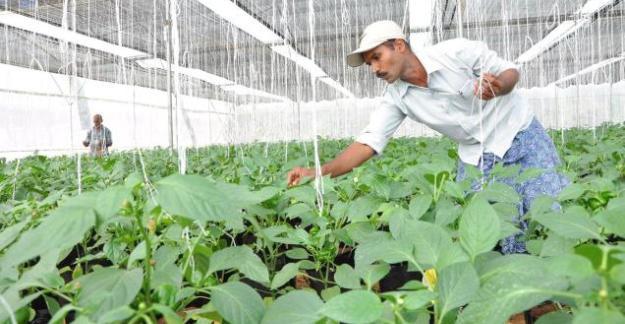 Mukhyamantri Green House Scheme Himachal Pradesh