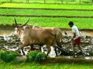 Rythu Bandhu Pathakram Scheme