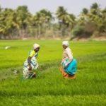 आंध्र प्रदेश अन्नदाता सुखीभव योजना | AP Annadata Sukhibhava Scheme