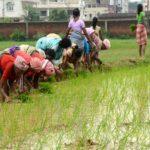 Application Form Jharkhand Kisan Rahat Kosh Srijit Yojana | झारखंड किसान राहत कोष सृजित योजना एप्लीकेशन फॉर्म 2020